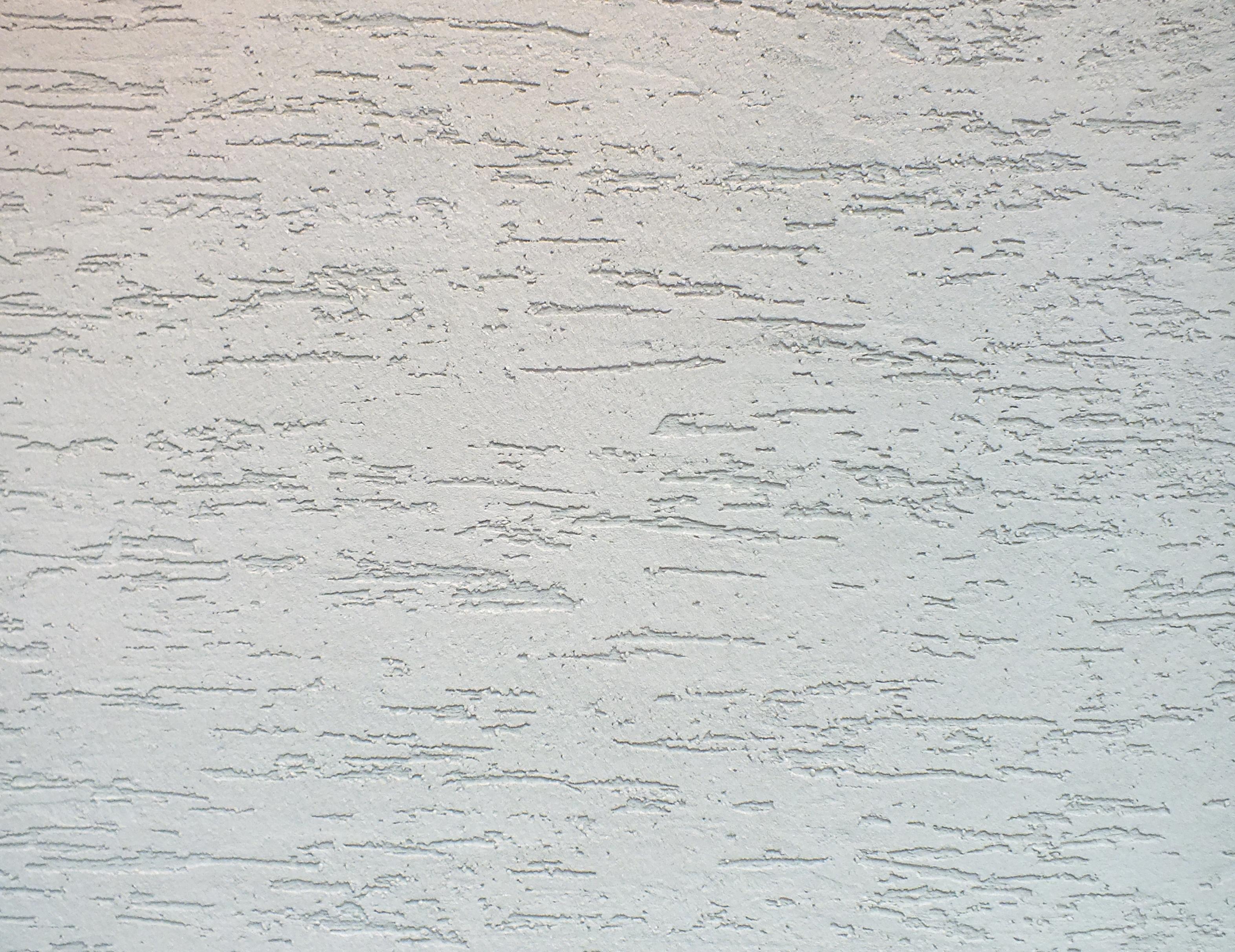 короед белый фото